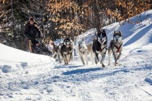 Trineo con perros en Lanaudiere Quebec